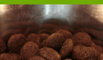 We all want the best for our fur babies, but what is the best dog food? We've got your answer!