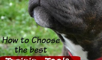 How To Choose the Best Training Tools For Dog