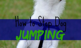 Nothing can be more annoying than a jumping dog. Here's how to stop your dog from jumping all over you.