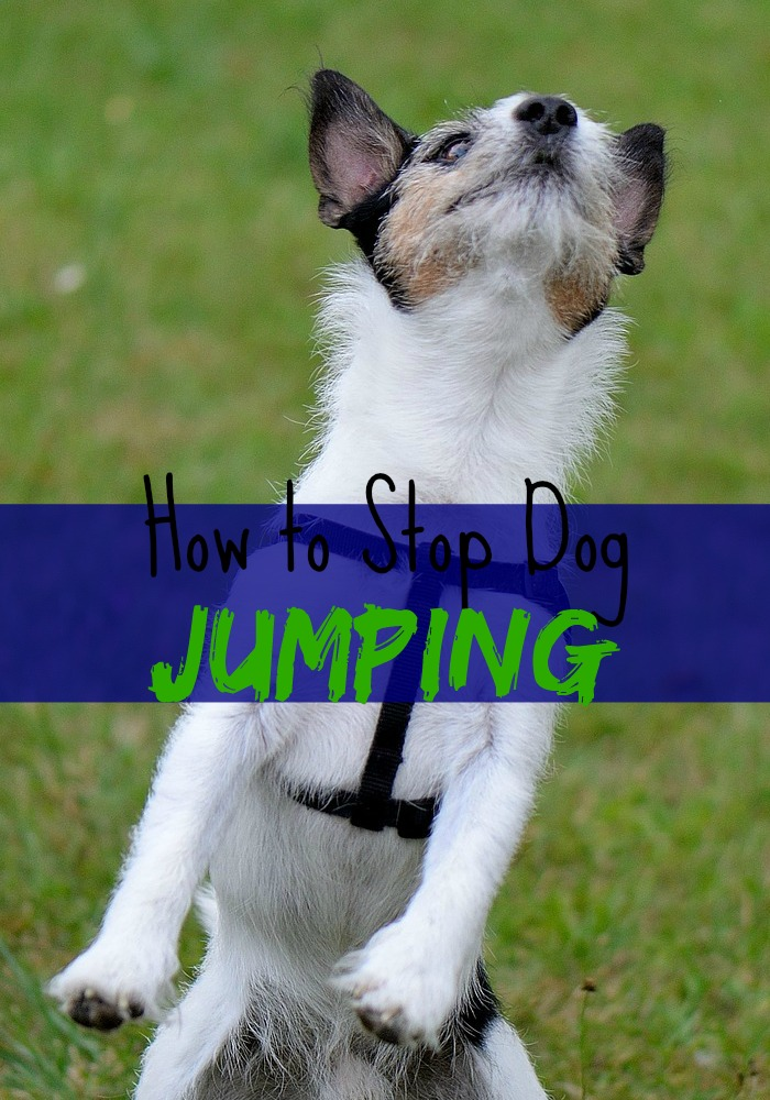How to Stop Dog Jumping!