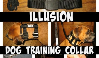 If you have not heard of the Illusion Dog Collar, you need to read this! It will be like you are walking a brand new dog.