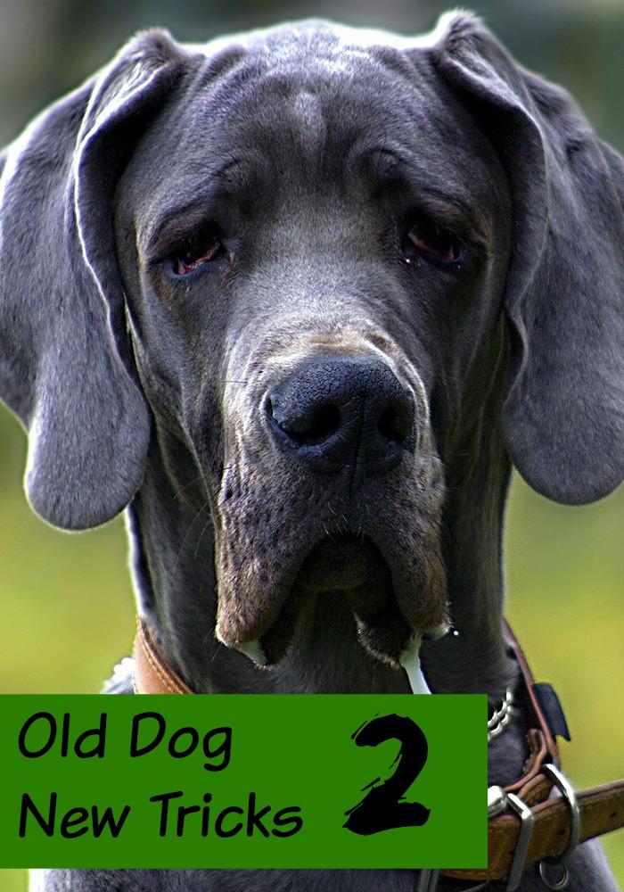 52 Tricks to Teach Your Dog - DoggieBuddy