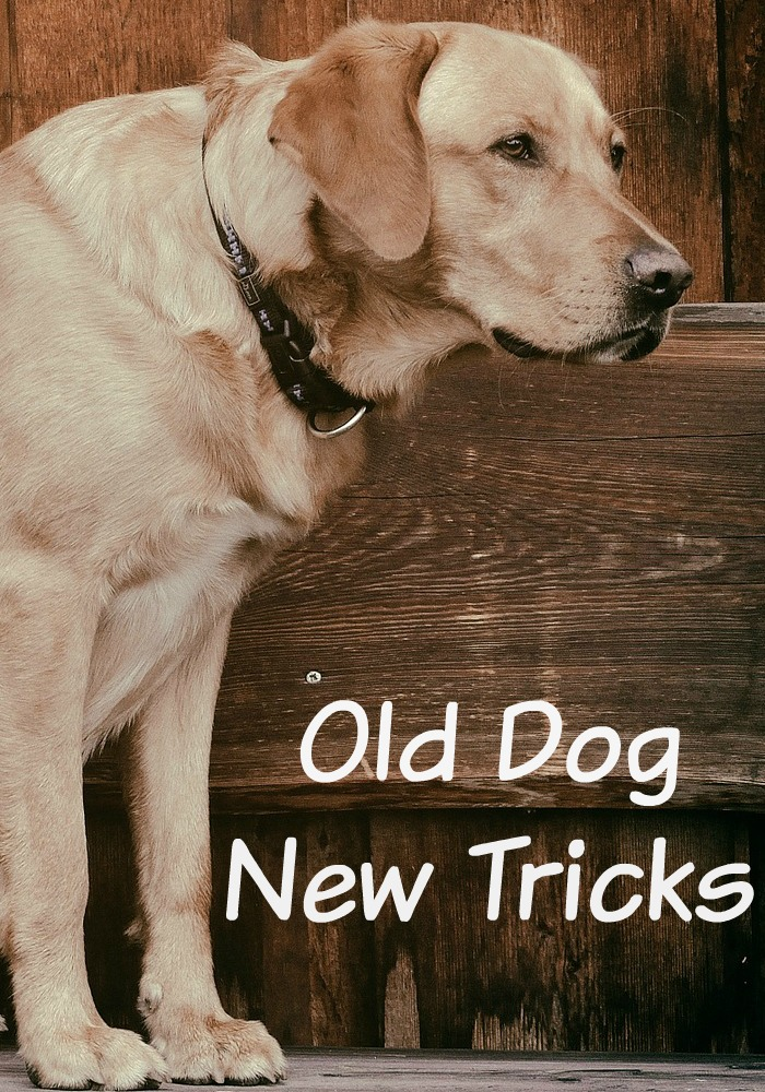 Old dogs can learn new tricks. Here's how. Training can help.