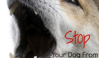 Dog barking driving you insane? Check out how to stop it now.