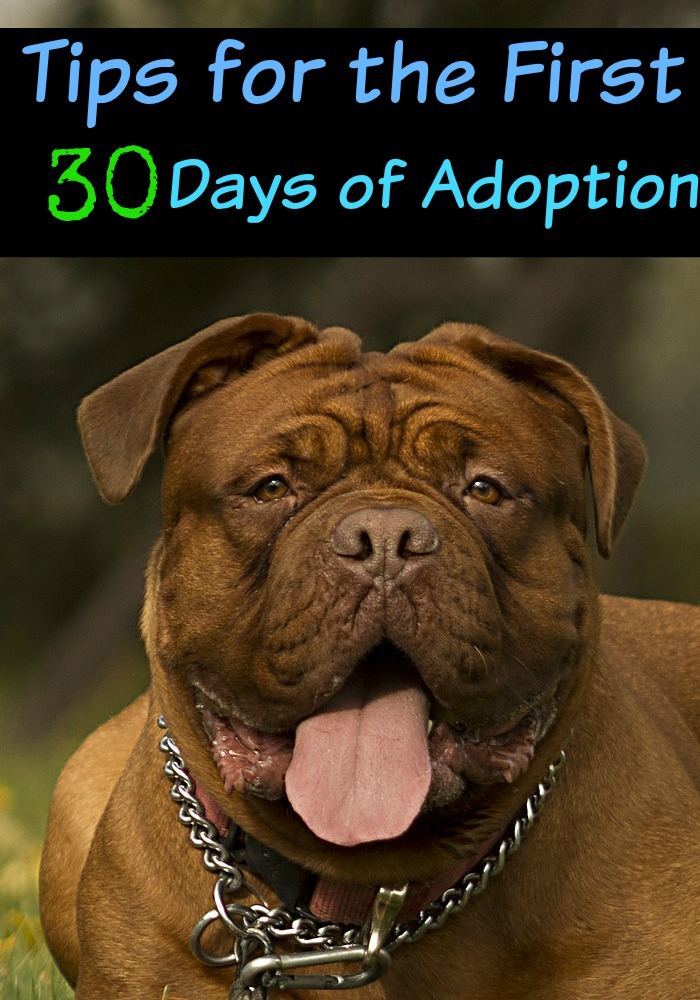 17 Tips for the First 30 Days of Dog Adoption