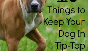 If your dog is in shape, you might be too! Check out these things to keep your dog in tip-top shape.