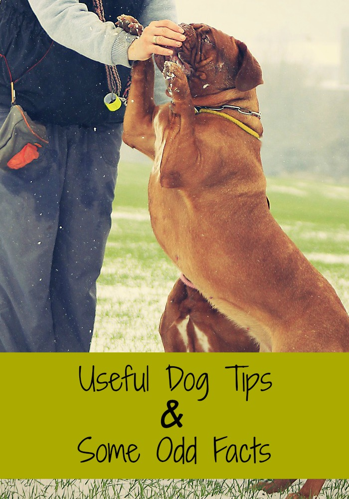 Useful DogTips and Some Odd Facts