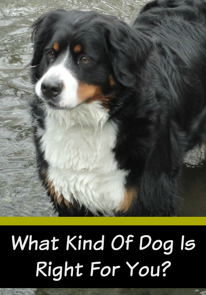 What Kind of Dog is Right for You?