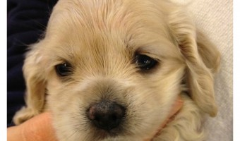 How to Avoid Puppy Mills