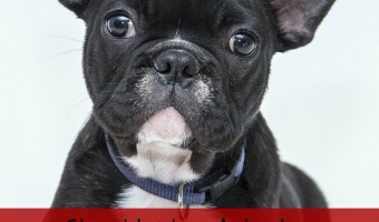 Should You Adopt a Puppy or an Adult?