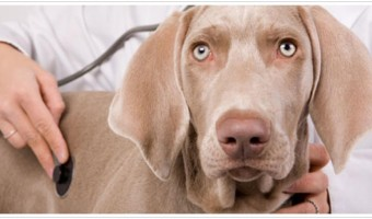 6 Most Common Dog Health Problems