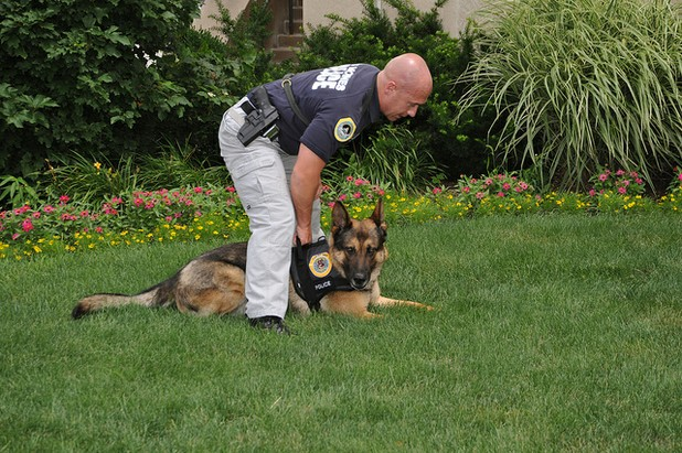 All About K9 Dog Training