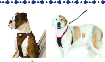 Tips for choosing the right dog harness for your dog training needs
