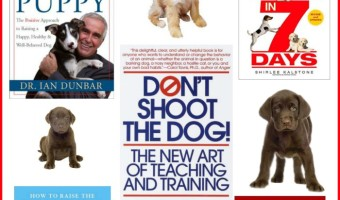 Best Dog Training Books to Get Started with Training