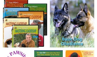 5 Dog Training DVDs to Raise a Healthy Dog