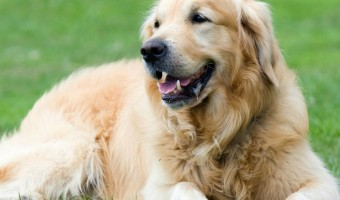 Communicate with Your Dog Through Obedience Dog Training