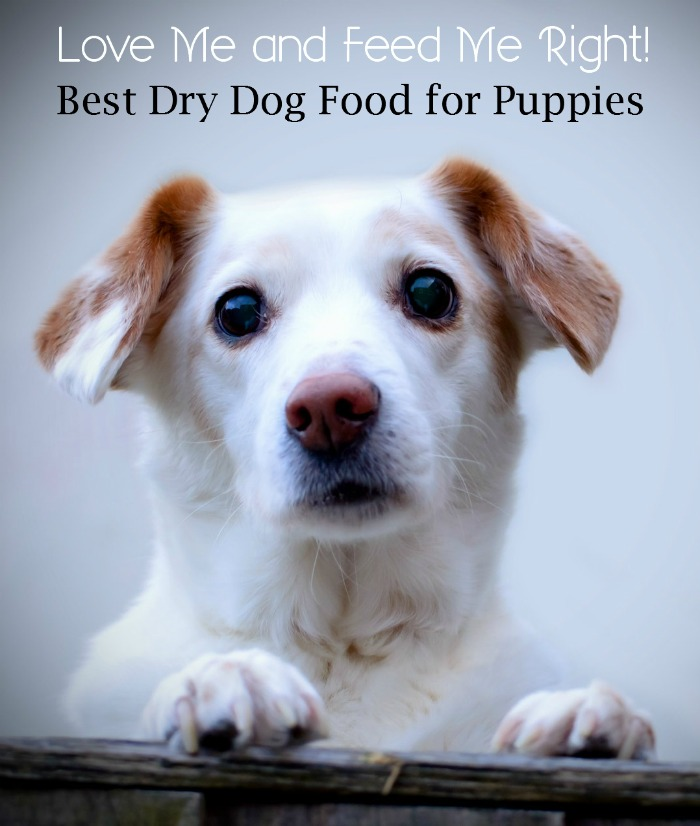 What is the Best Dry Dog Food for Your Puppy?