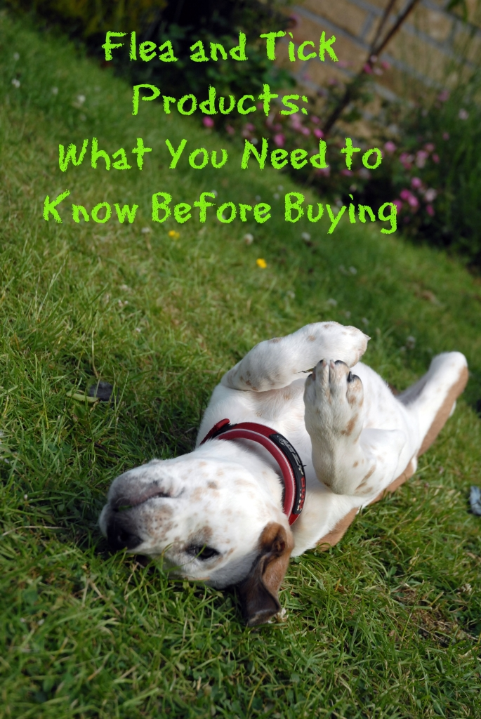 Flea and Tick Products: What You Need to Know Before Buying