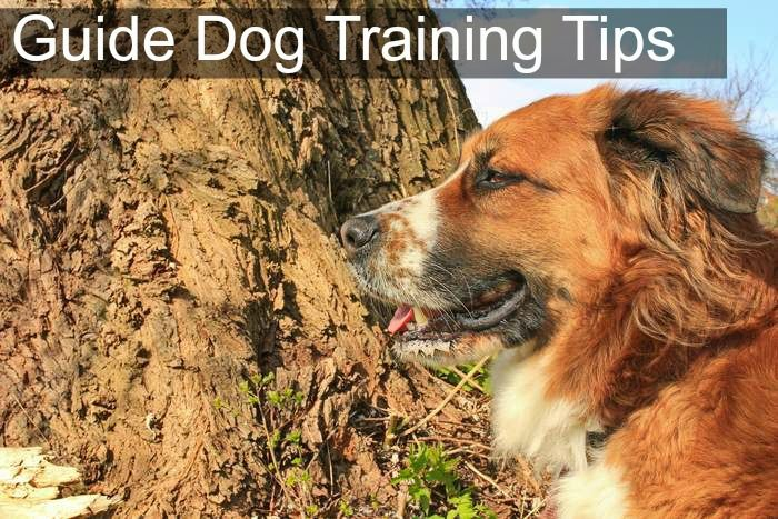 Guide Dog Training Tips