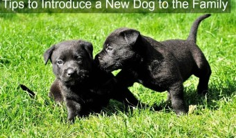 Tips to introduce a new dog to your family