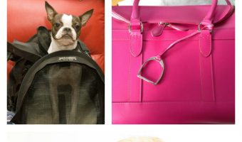 Tips for Choosing the Best Dog Carriers