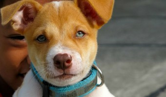 Dog Training Collars: Things to Think About When Choosing