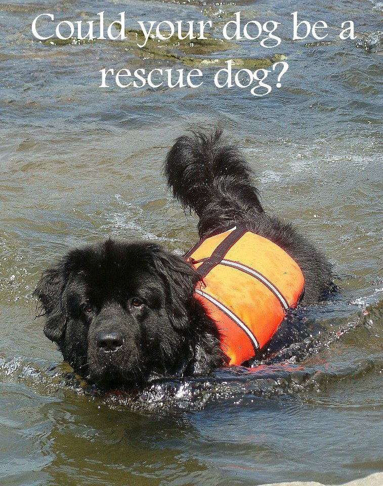 Is Your Dog a Candidate for Rescue Dog Training?