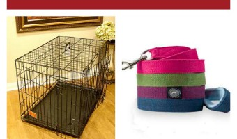 5 Dog Training Equipment Items You Need Now! | DogVills.com