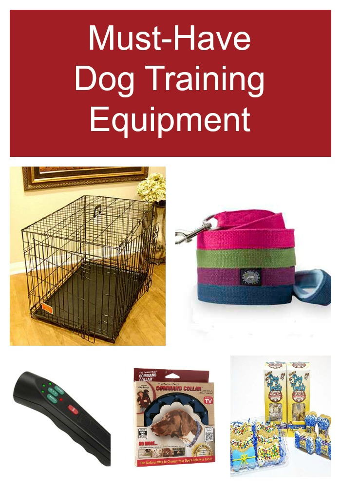 5 Pieces of Dog Training Equipment you Must Own