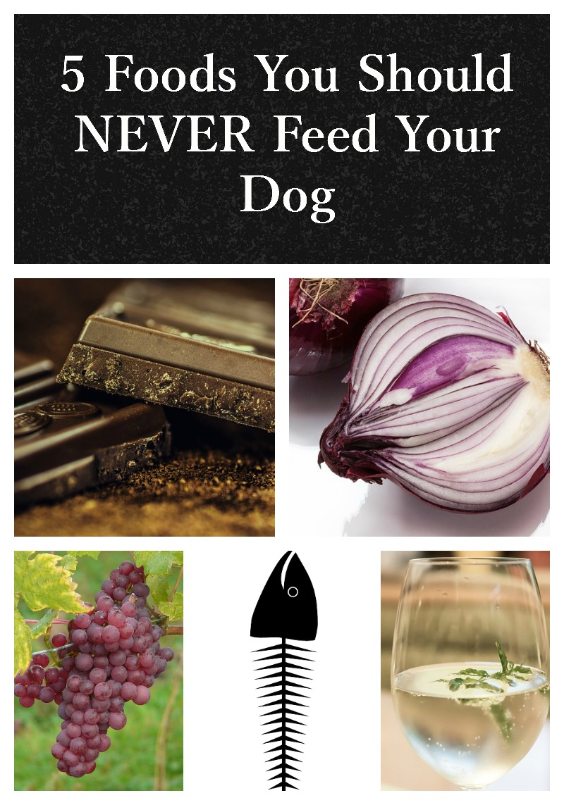 Dog Food Safety: 5 Things You Should NEVER Give Your Dog