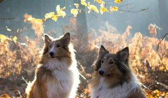 Tips for Finding the Right Dog Training Club for Your Pet | DogVills.com