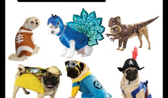 SmallDog costumes
