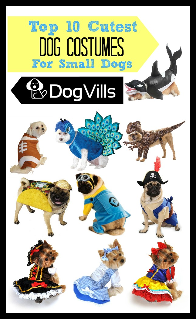 Top 10 Cutest Costumes for Small Dogs| DogVills.com