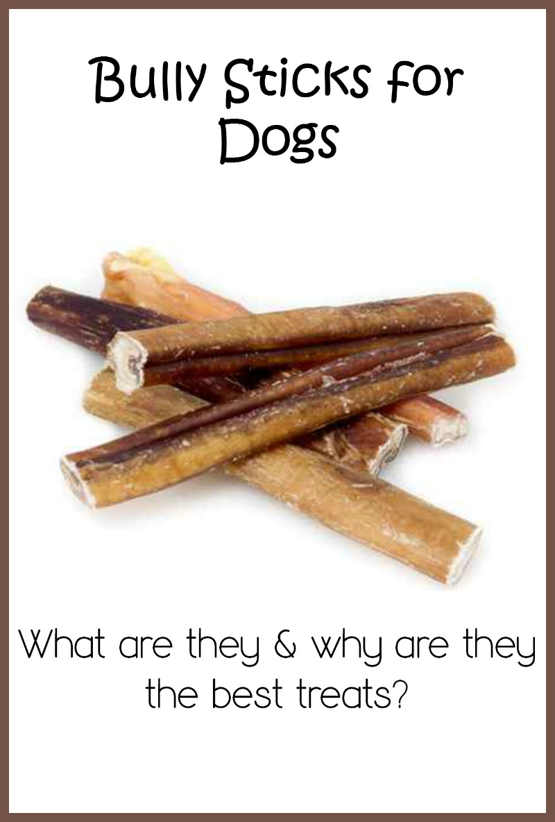 why are bully sticks one of the best dog treats dogvills. Black Bedroom Furniture Sets. Home Design Ideas