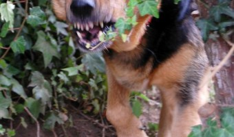 Dog Training Problems: How to handle aggressive dogs |DogVills.com