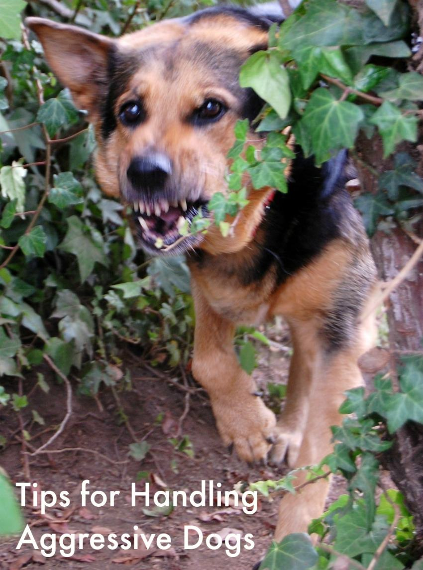Dog Training Problems: What to do When your Dog Becomes Aggressive