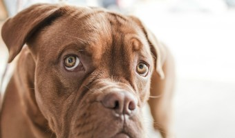 Alpha Dog Training: How to Teach Your Dog to See You as the Pack Leader | DogVills.com