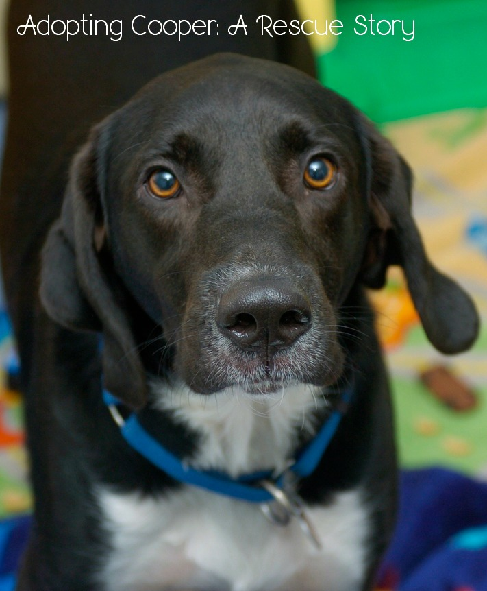 Cooper's Dog Adoption Story: Finding the Perfect Dog for Us