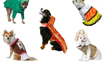 5 Great Funny Halloween Costumes For Large Dogs