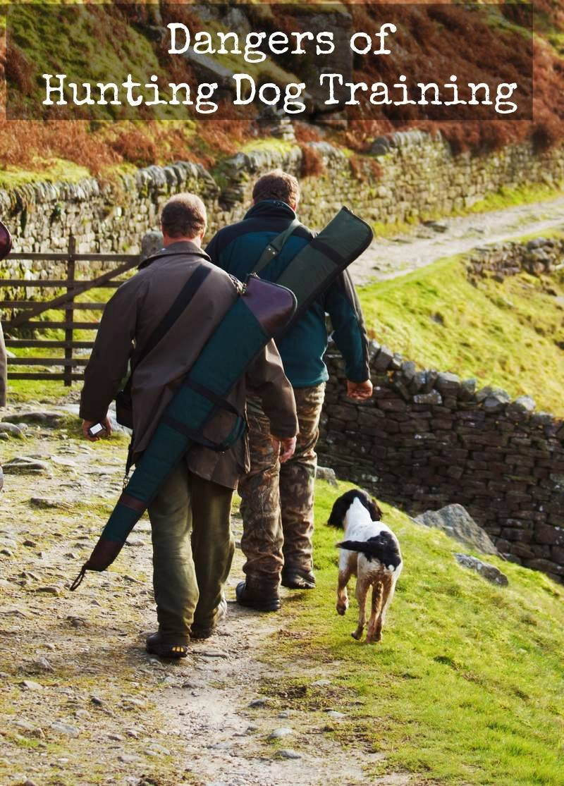 Five Hidden Dangers During Hunting Dog Training