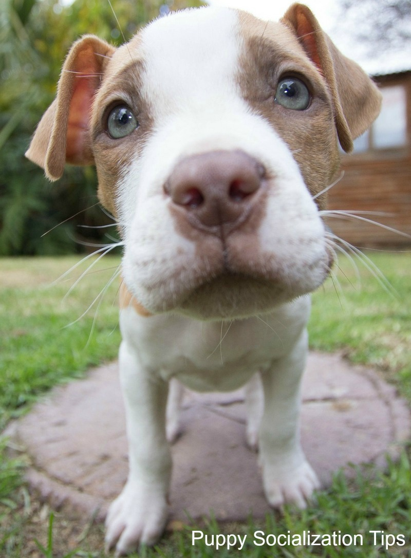 Dog training tips to help socialize a puppy