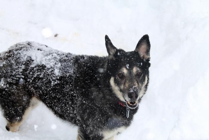 Tasha's Dog Story