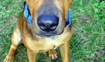 Dog training Basics: Teaching Your Pup to Sit