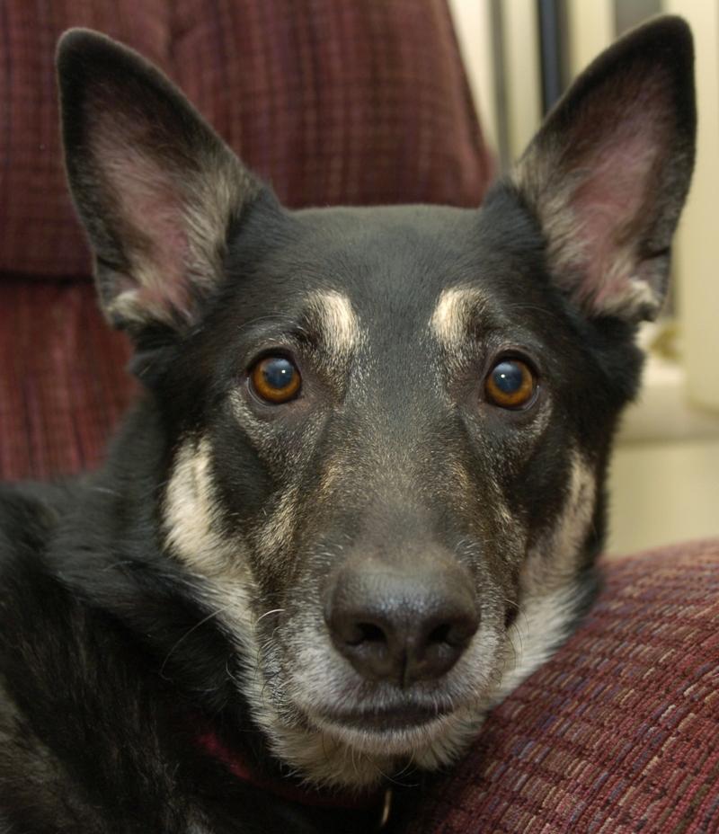 Caption My Dog Wednesday: What is Tasha Thinking?