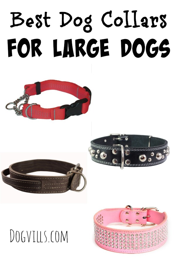 Best Dog Collars For Large Dogs Dogvills