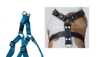 Tips for Choosing the Best Dog Harness For Large Dogs