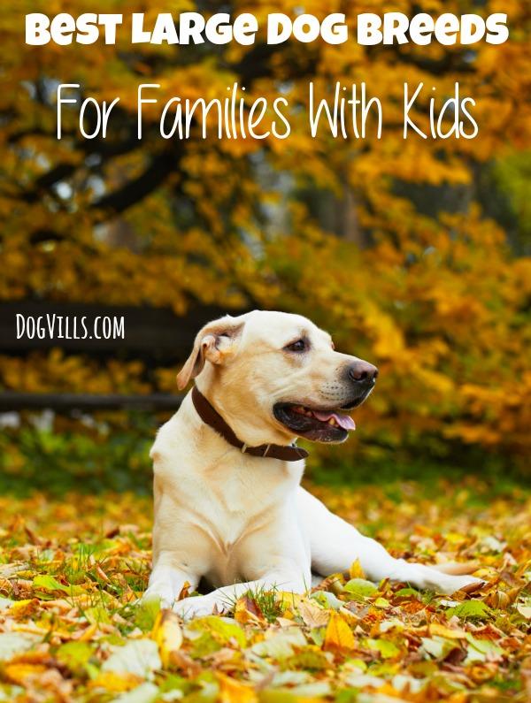 5 best large dog breeds for families with kids - Best dog breeds kids ...