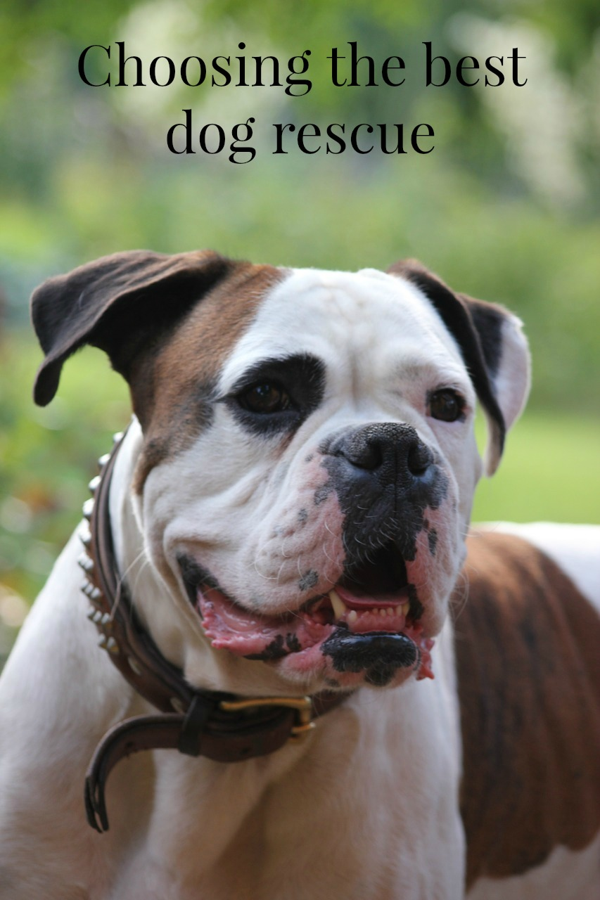 How to Choose the Best Dog Rescue
