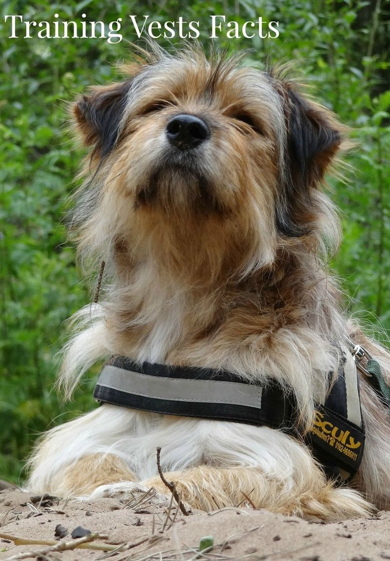 How to Use Dog Training Vests