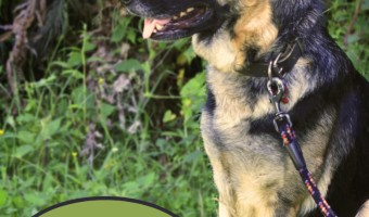 German Shepherd Dog Training Tips | DogVills.c